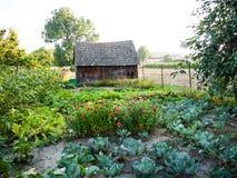 Giardino degli ortaggi freschi Fotografia Stock Libera da Diritti
