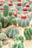 Giardino dei cactus fotografia stock