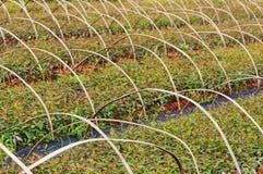 Giardino dei semenzali del fiore Fotografie Stock Libere da Diritti