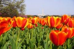 Giardino dei tulipani al carillon olandese Fotografie Stock Libere da Diritti