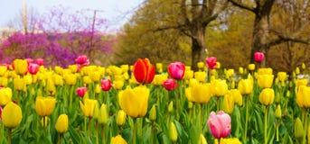 Giardino dei tulipani al carillon olandese Immagini Stock Libere da Diritti
