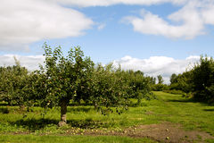 Giardino del Apple Immagini Stock Libere da Diritti