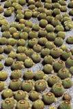 Giardino del cactus Immagini Stock Libere da Diritti