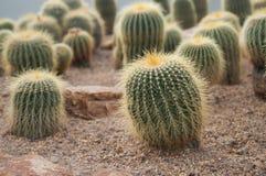 Giardino del cactus Immagini Stock