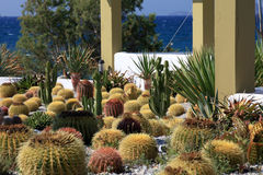 Giardino del cactus Fotografia Stock