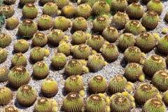 Giardino del cactus Immagine Stock