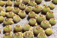 Giardino del cactus Fotografia Stock Libera da Diritti