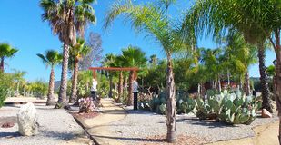 Giardino del cactus - conservazione dell'acqua immagini stock libere da diritti