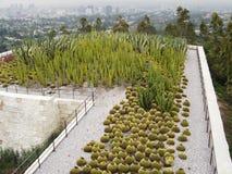 Giardino del cactus di Getty fotografia stock libera da diritti