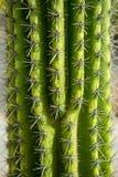 Giardino del cactus di Lanzarote Guatiza Fotografia Stock
