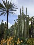 Giardino del cactus - Elche - Spagna Fotografia Stock