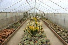 Giardino del cactus a Kalimpong nel distretto di Darjeeling, India Fotografia Stock