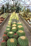 Giardino del cactus a Kalimpong nel distretto di Darjeeling, India Fotografia Stock Libera da Diritti