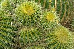 Giardino del cactus nel Lloret de marzo, Costa Brava, Catalogna, Spai Fotografia Stock
