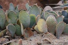 Giardino del cactus nel parco Fotografia Stock