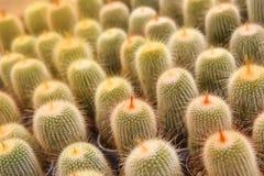 Giardino del cactus nell'azienda agricola del cactus immagine stock