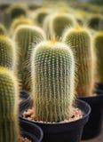 Giardino del cactus nell'azienda agricola del cactus fotografie stock libere da diritti