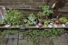 Giardino del cottage Fotografie Stock Libere da Diritti