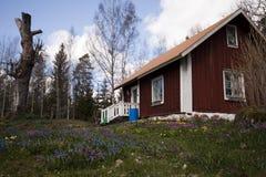 Giardino del cottage Fotografia Stock