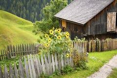 Giardino del cottage nelle alpi Immagini Stock