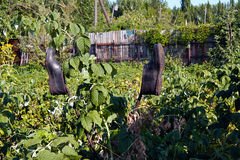 Giardino del  di Ð nel villaggio galosce Immagini Stock