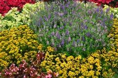 Giardino del fiore fotografia stock libera da diritti