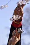 Giardino del fiore di ciliegia Fotografie Stock Libere da Diritti