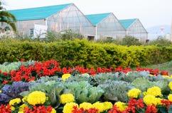 Giardino del fiore e dell'ortaggio Fotografia Stock