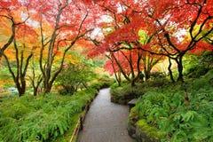 Giardino del giapponese di autunno immagini stock libere da diritti