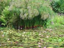 Giardino del giglio di acqua Fotografie Stock Libere da Diritti