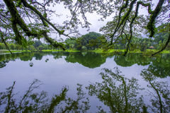 Giardino del lago, Taiping Fotografia Stock Libera da Diritti