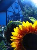Giardino del paese Fotografia Stock Libera da Diritti