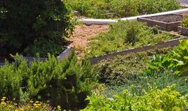 Giardino del parco con molte erbe differenti Immagini Stock Libere da Diritti