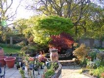 Giardino del patio con i vasi dello stagno e della pianta del giardino Fotografie Stock