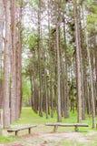 Giardino del pino a Chiang Mai Thailand Immagini Stock Libere da Diritti