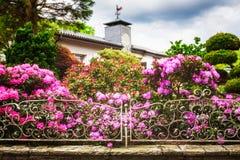 Giardino del rododendro Immagine Stock
