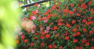 Giardino del rododendro con il banco di legno archivi video