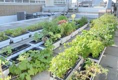 Giardino del tetto Immagini Stock