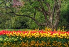 Giardino del tulipano Fotografia Stock Libera da Diritti