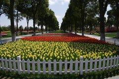 Giardino del tulipano Immagine Stock