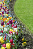 Giardino del tulipano Immagini Stock