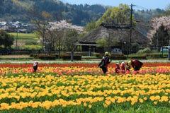 Giardino del tulipano con ad Oita Giappone fotografie stock libere da diritti