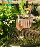 Giardino del vino Fotografia Stock Libera da Diritti