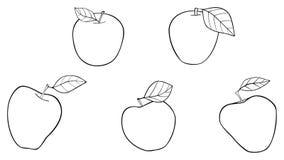 Giardino delizioso - cinque le migliori mele con le foglie Fotografia Stock Libera da Diritti