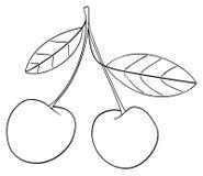 Giardino delizioso - due ciliege si sono collegate insieme ad un gambo Immagini Stock Libere da Diritti