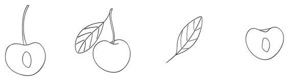 Giardino delizioso - insieme di una ciliegia e le sue metà e foglie Immagini Stock Libere da Diritti
