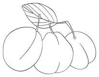 Giardino delizioso - tre prugne con una foglia Immagine Stock Libera da Diritti