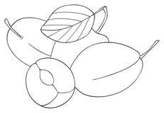 Giardino delizioso - tre prugne con una foglia e una metà della prugna Immagini Stock Libere da Diritti