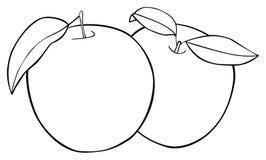 Giardino delizioso - un insieme di due mele con tre foglie Immagini Stock Libere da Diritti