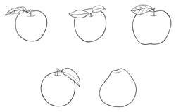 Giardino delizioso - un insieme di 5 mele con le foglie Fotografia Stock
